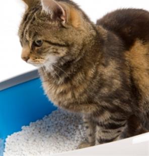 Цистит у кошачьих